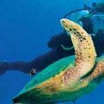 Princesse du Lagon Bungalow à Tuléar Ifaty Madagascar, tortue marine dans le lagon