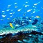 Princesse du Lagon hôtel à Tuléar Ifaty Madagascar, plongée sous marine