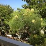 vue côté mer et jardin